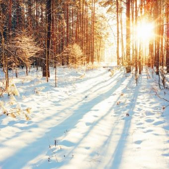 winter fertility strategies